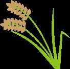 稲(米)のイラスト
