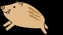 イノシシ(猪)ウリボウ